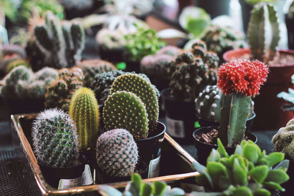 cactus care tips repotting