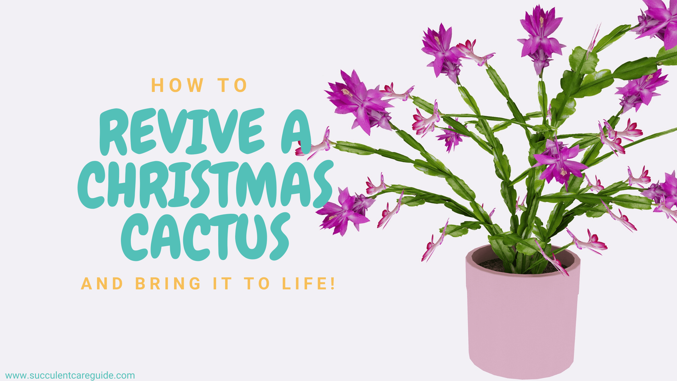 how to revive a christmas cactus