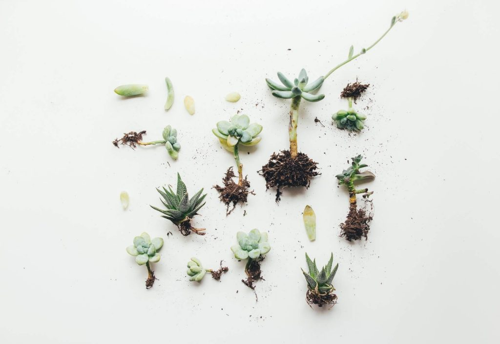succulent care for beginners repotting