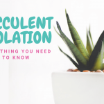 Succulent Etiolation: Everything You Need to Know