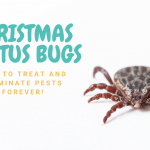 Christmas Cactus Bugs: How to Treat and Eliminate Pests Forever!