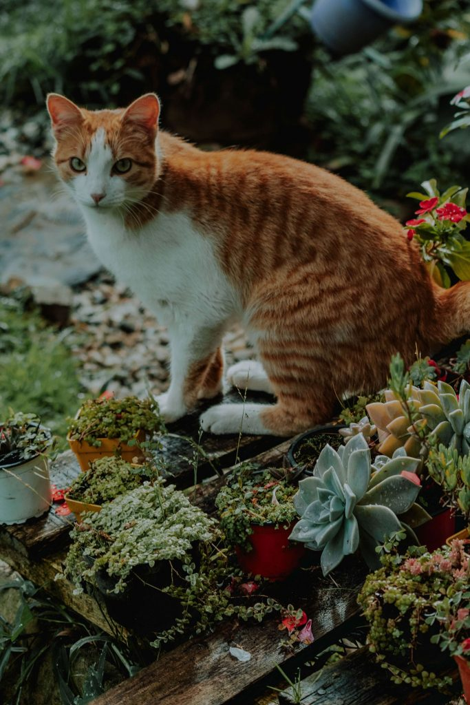 cats and succulents