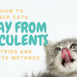 How to Keep Cats Away from Succulents | 6 Proven Tips