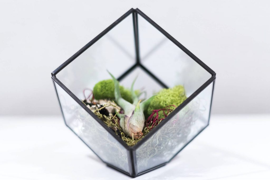 how to keep cats away from succulents with terraniums