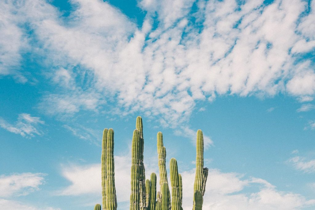how to make cacti grow faster