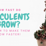How fast do succulents grow? - How to make succulents grow faster