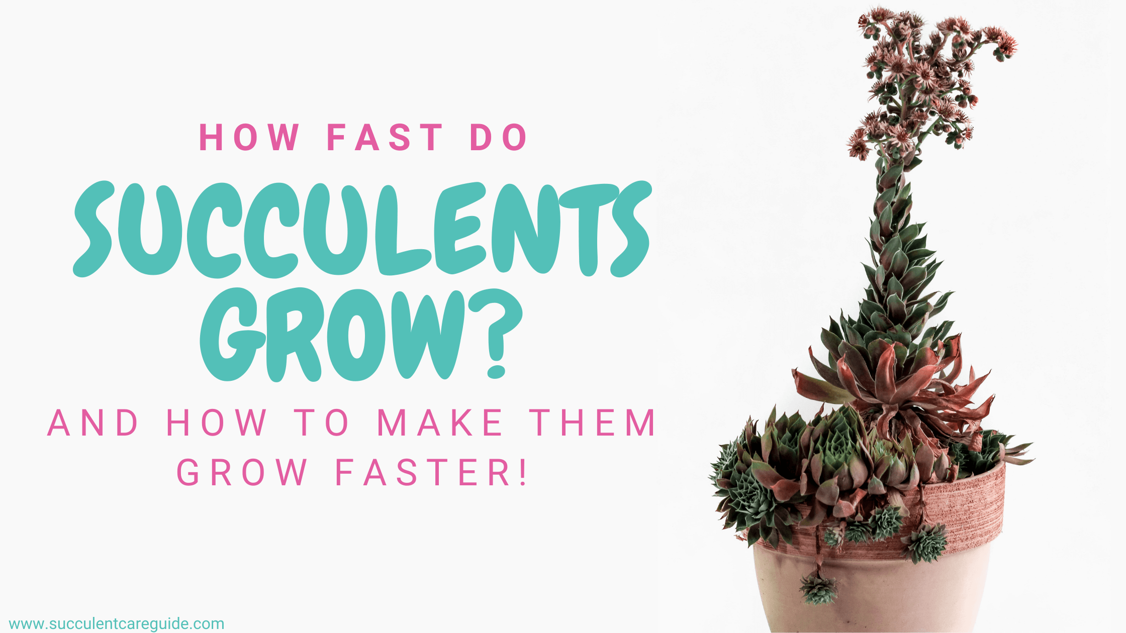 how fast do succulents grow - how to make succulents grow faster