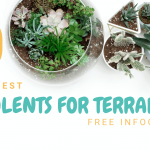 10 Best Succulents for Terrariums - Free Infographic!