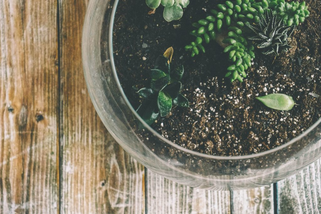 how to take care of a succulent terrarium