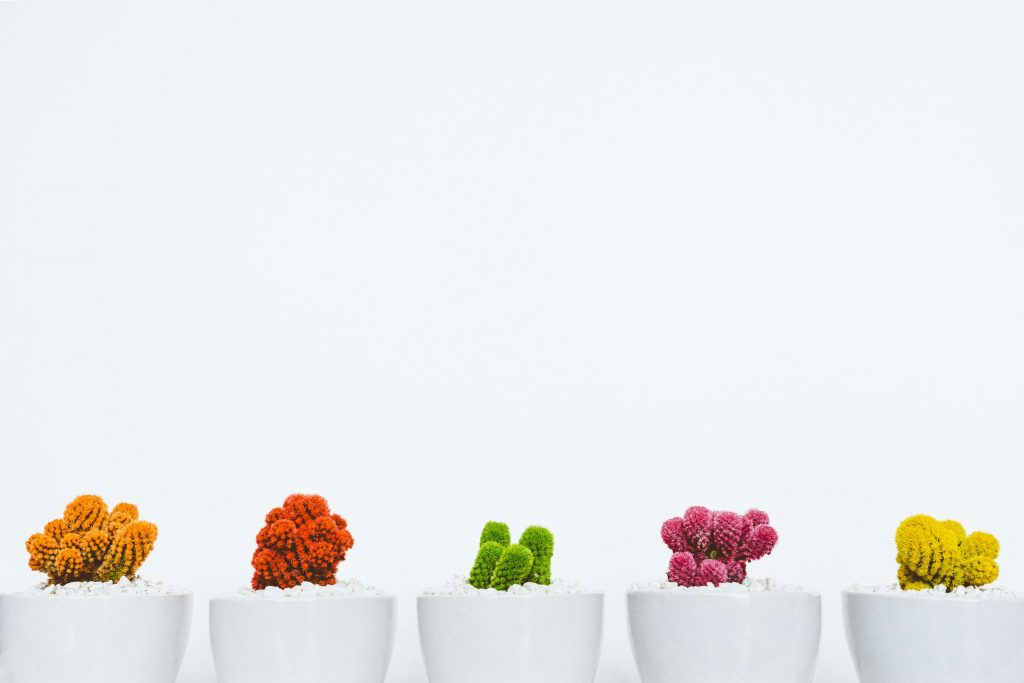 how to take care of small cactus