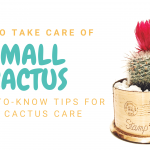How to take care of small cactus | Need-to-Know tips for mini cactus care