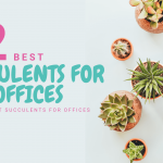 12 Best Succulents for Offices - Low Light Succulents for Offices