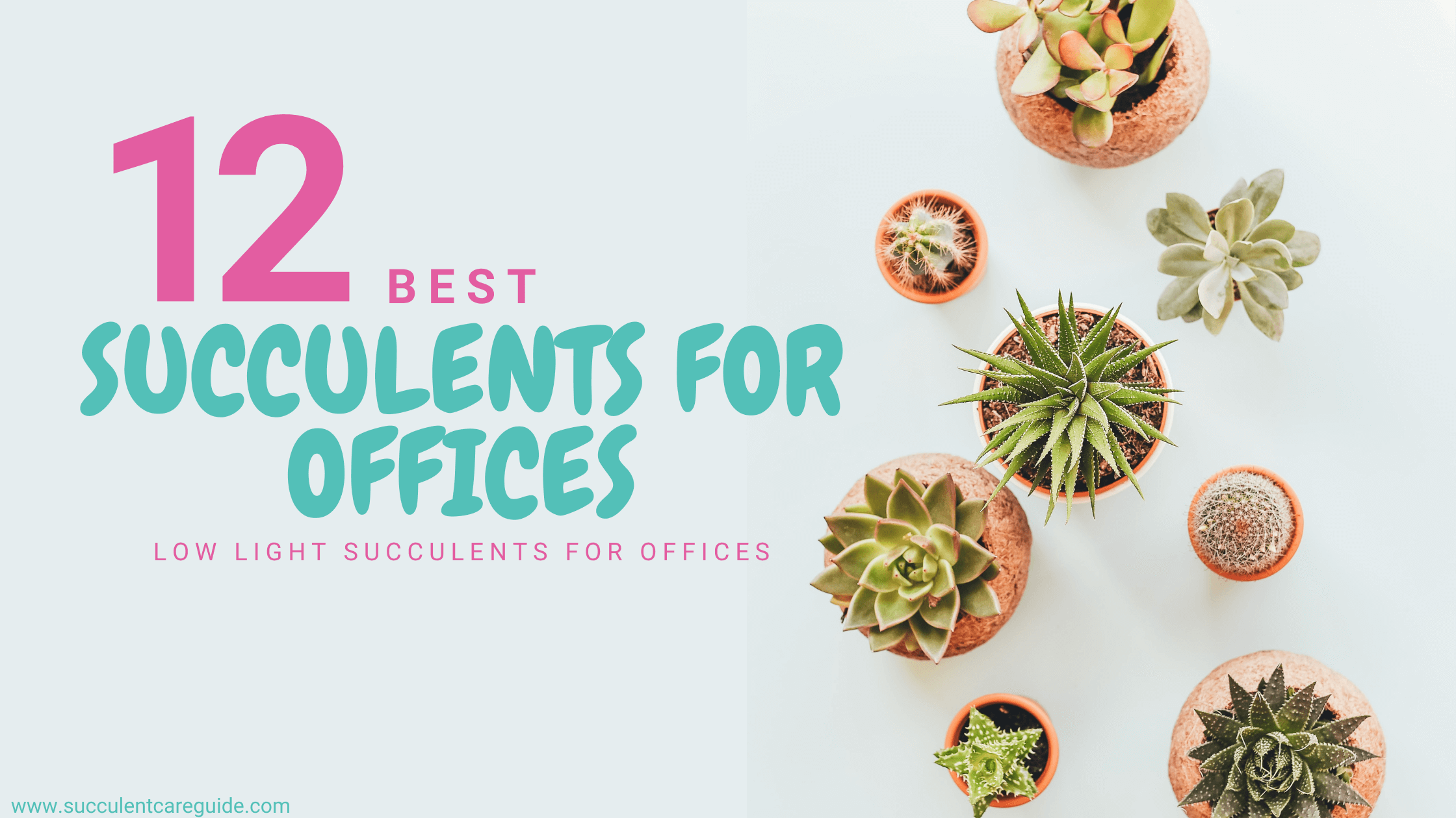 best succulents for offices