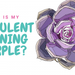 Succulent Turning Purple? Here's What It Means