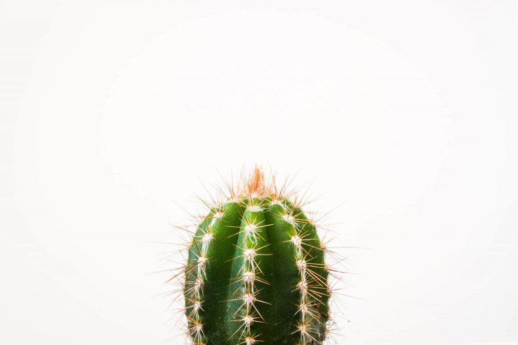 why is my cactus going soft